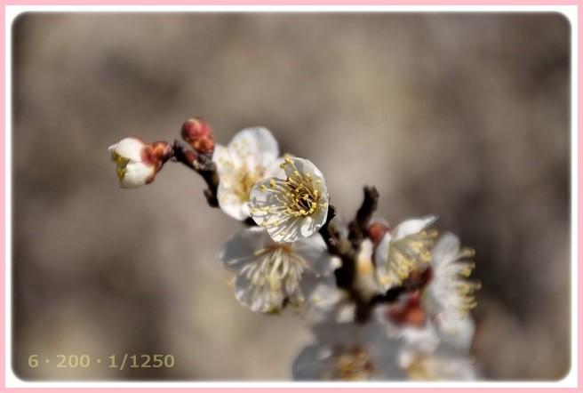 f:id:yasukazu01:20160303205620j:image