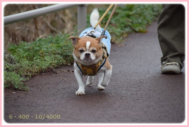 f:id:yasukazu01:20160309183939j:image