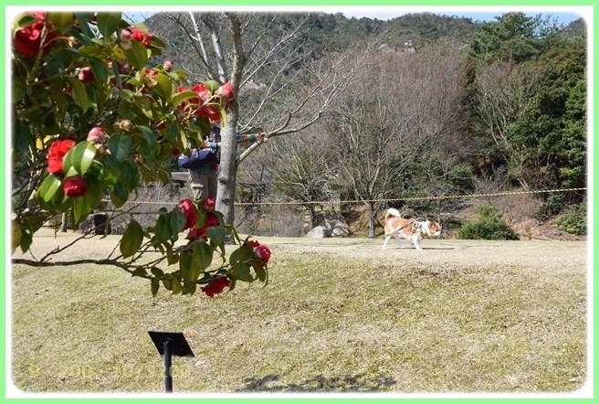 f:id:yasukazu01:20160320214119j:image