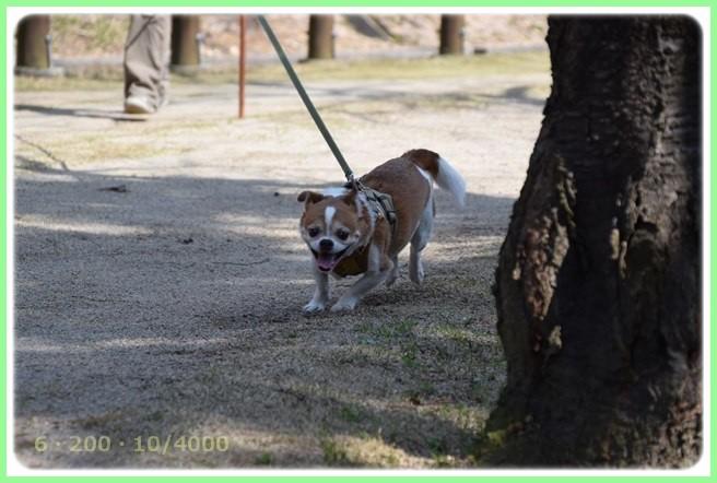 f:id:yasukazu01:20160321203607j:image