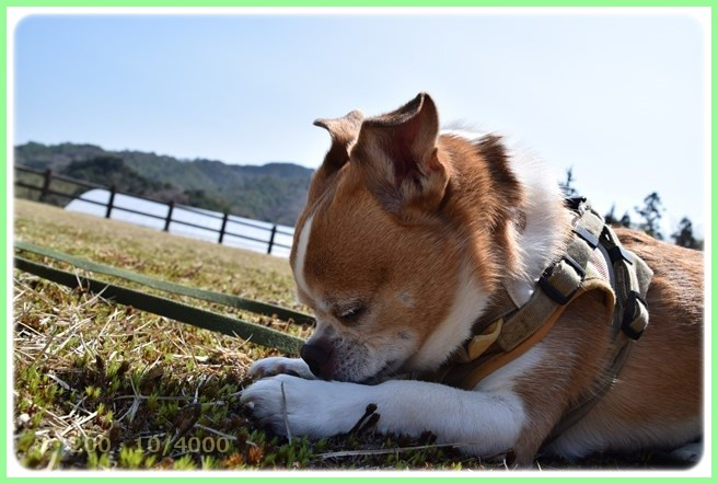 f:id:yasukazu01:20160321212547j:image