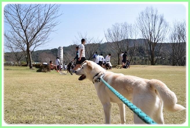 f:id:yasukazu01:20160321213544j:image