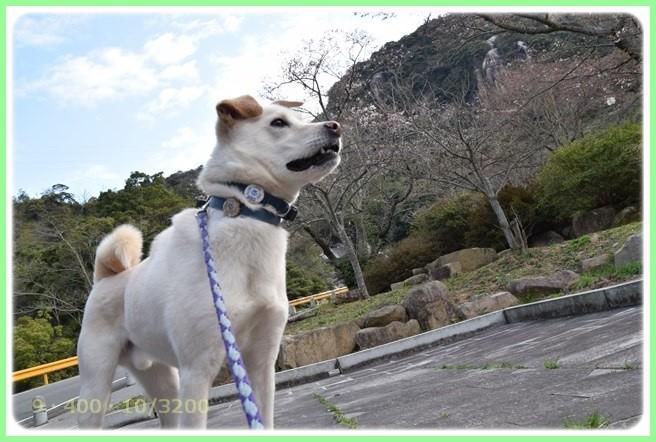 f:id:yasukazu01:20160324201903j:image