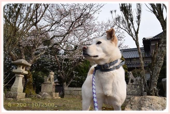 f:id:yasukazu01:20160330191716j:image