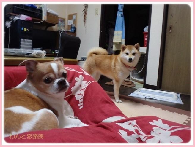 f:id:yasukazu01:20160330195857j:image