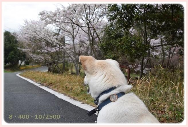 f:id:yasukazu01:20160403200123j:image
