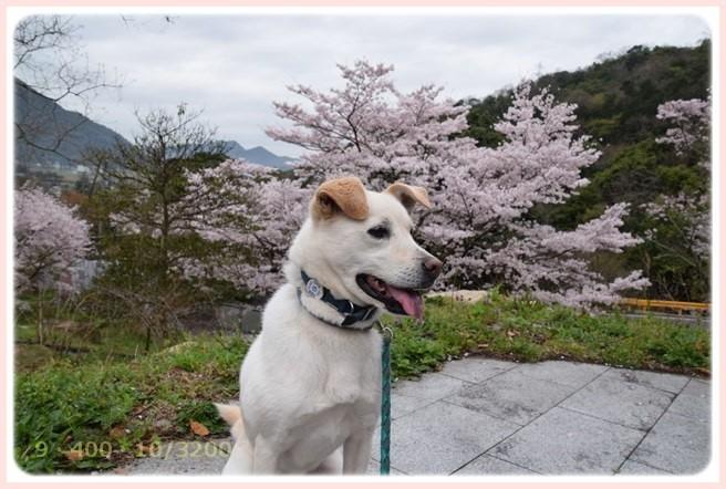 f:id:yasukazu01:20160403200548j:image