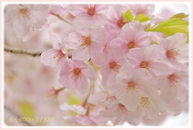 f:id:yasukazu01:20160403201004j:image