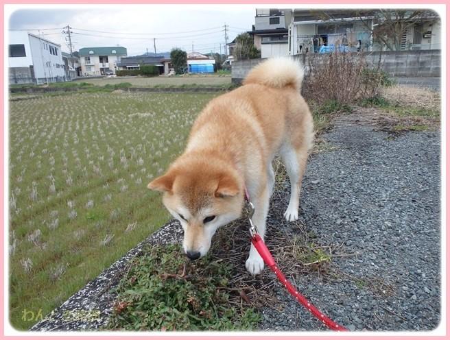f:id:yasukazu01:20160403201634j:image