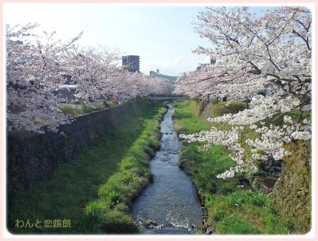 f:id:yasukazu01:20160404113540j:image