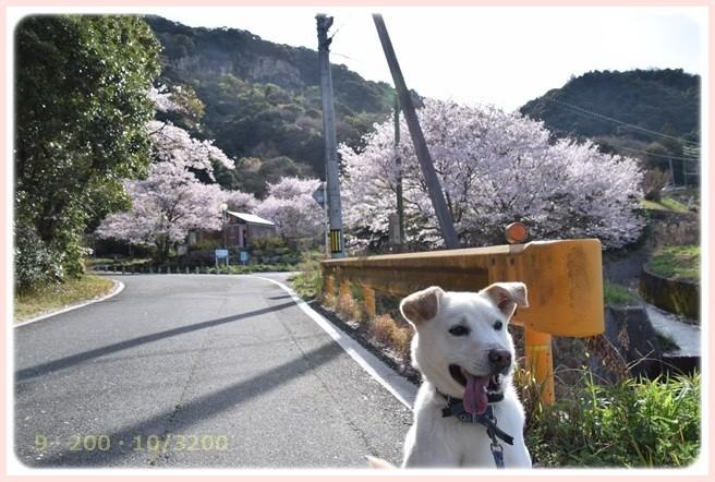 f:id:yasukazu01:20160407185959j:image