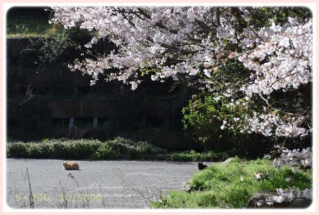 f:id:yasukazu01:20160407190147j:image