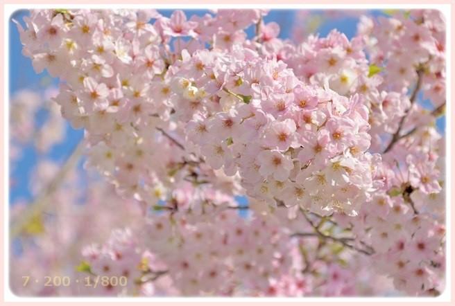 f:id:yasukazu01:20160407190307j:image