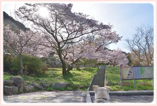 f:id:yasukazu01:20160407190326j:image