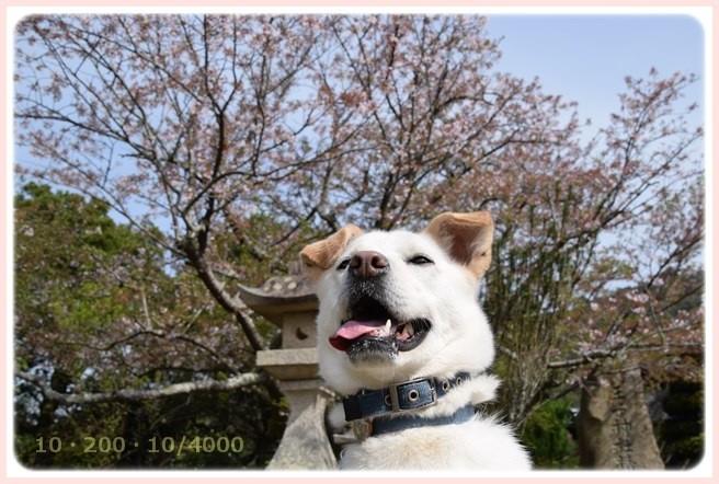 f:id:yasukazu01:20160409114743j:image