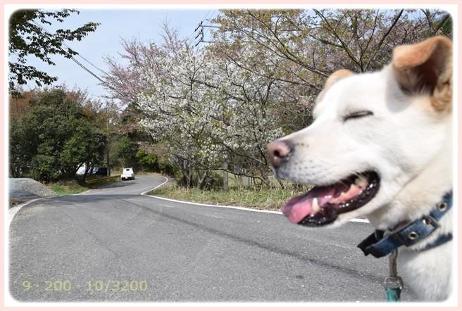 f:id:yasukazu01:20160409115535j:image