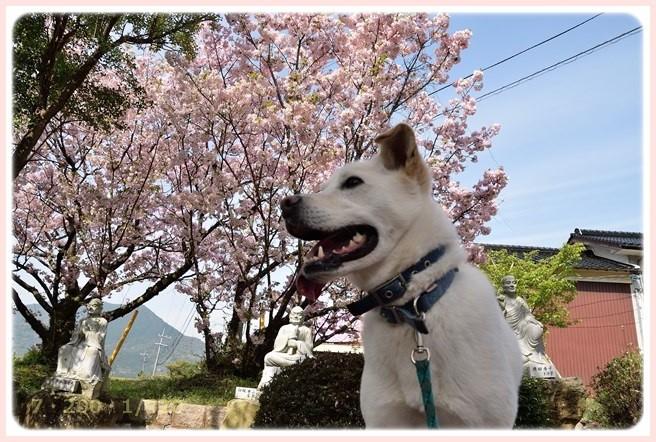 f:id:yasukazu01:20160409115825j:image