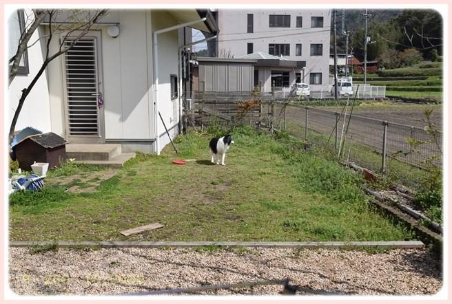 f:id:yasukazu01:20160409121336j:image