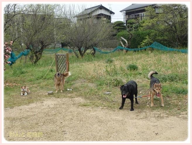f:id:yasukazu01:20160411194806j:image