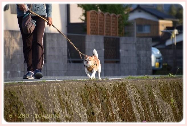 f:id:yasukazu01:20160414194605j:image