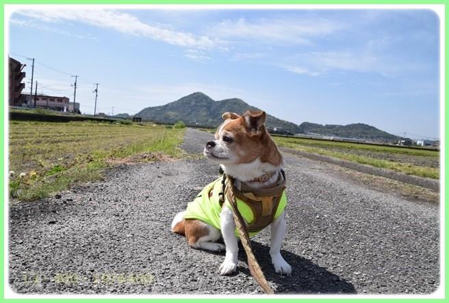 f:id:yasukazu01:20160416184220j:image