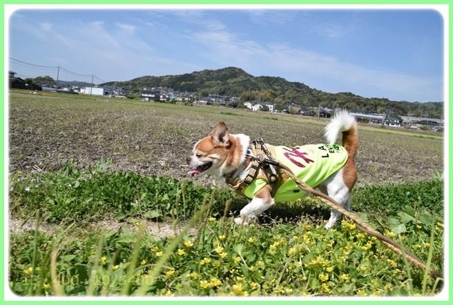 f:id:yasukazu01:20160416192649j:image