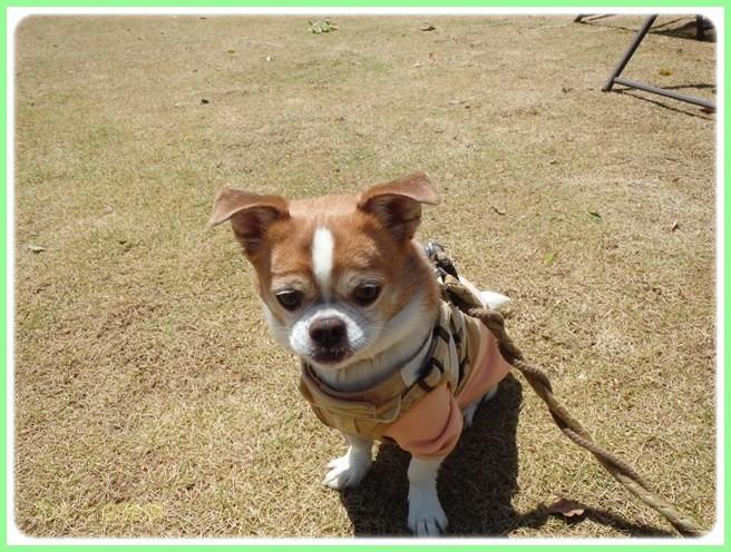 f:id:yasukazu01:20160418205701j:image