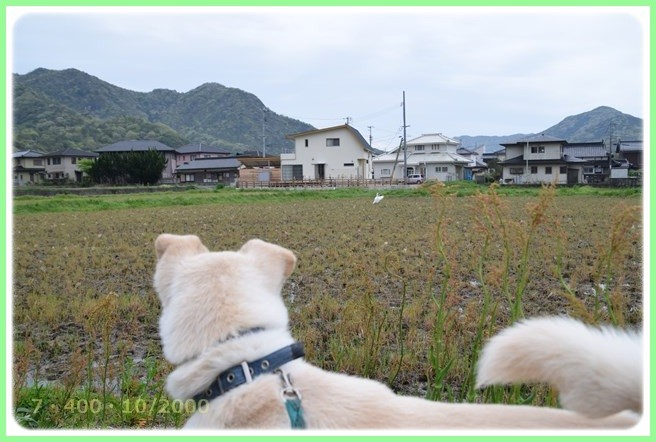 f:id:yasukazu01:20160422205549j:image