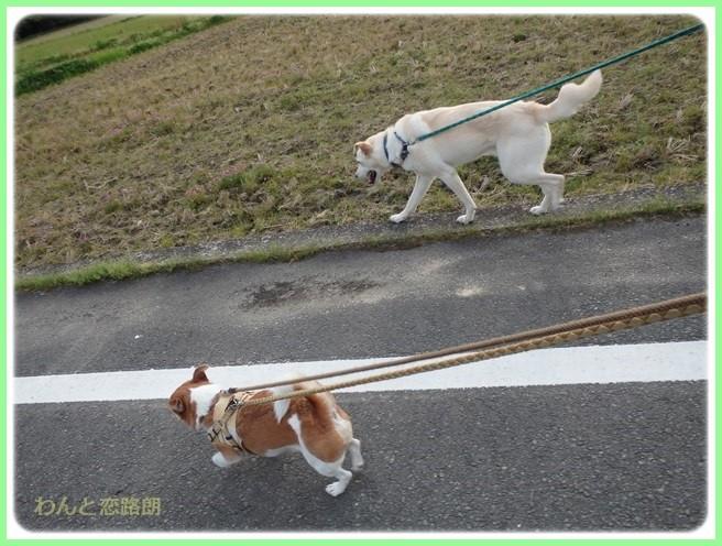 f:id:yasukazu01:20160426202956j:image