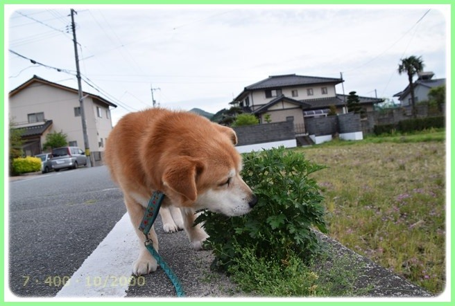 f:id:yasukazu01:20160426203624j:image