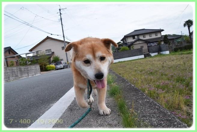 f:id:yasukazu01:20160426204123j:image