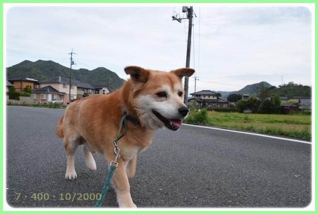 f:id:yasukazu01:20160426204217j:image