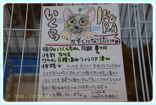 f:id:yasukazu01:20160501223810j:image