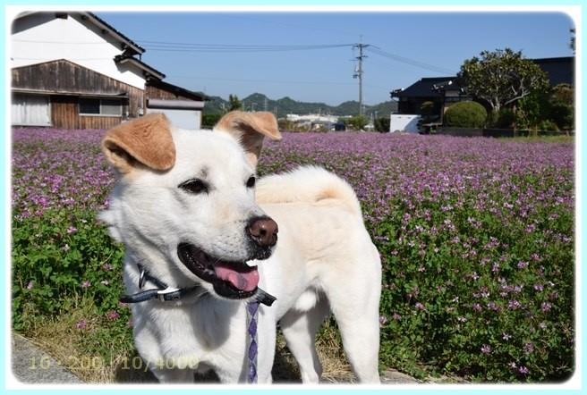 f:id:yasukazu01:20160501230506j:image
