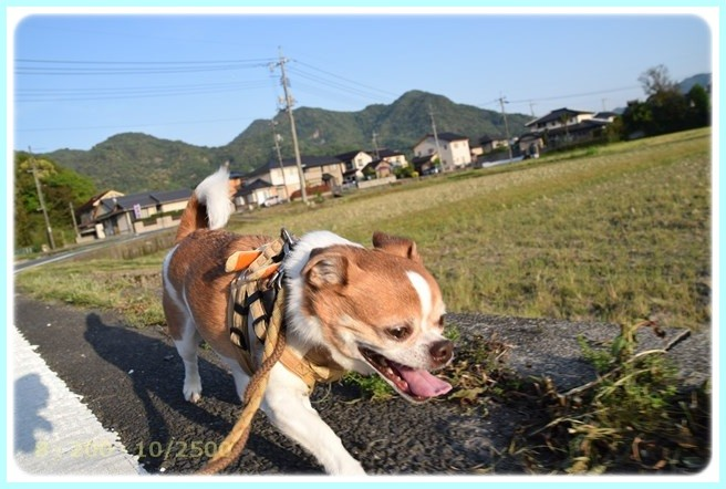f:id:yasukazu01:20160502212520j:image