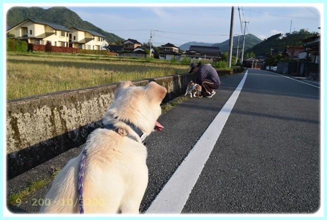 f:id:yasukazu01:20160502212641j:image