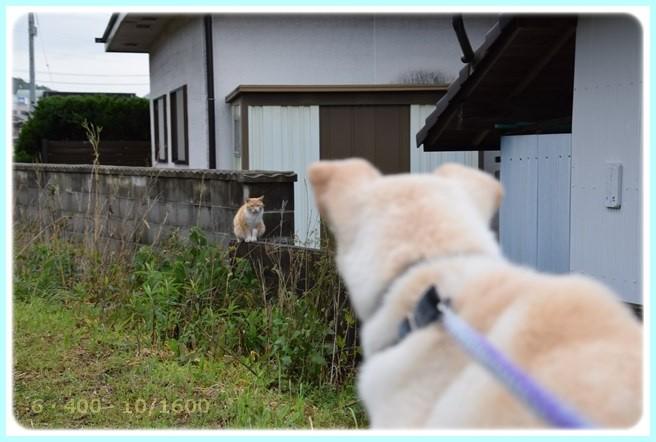 f:id:yasukazu01:20160503204545j:image