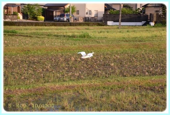 f:id:yasukazu01:20160503205034j:image
