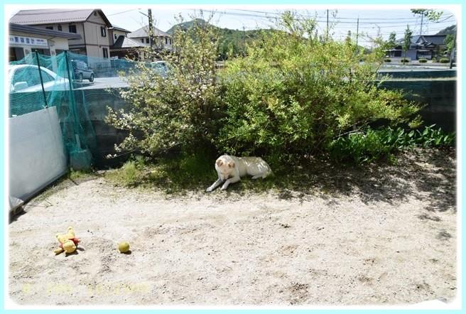f:id:yasukazu01:20160509104718j:image