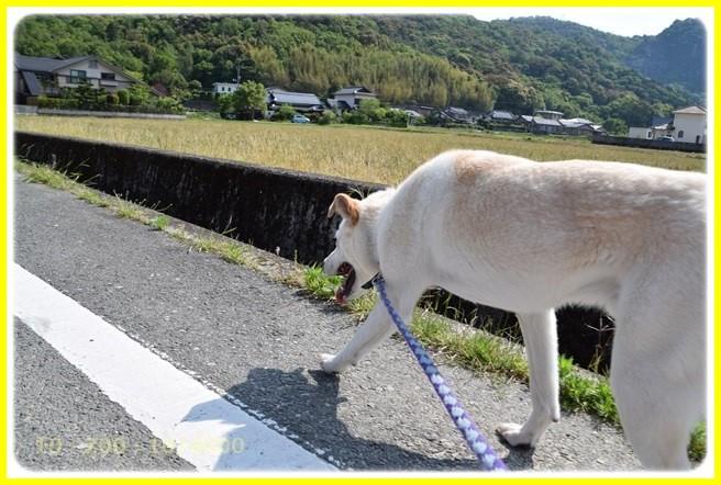 f:id:yasukazu01:20160514133551j:image