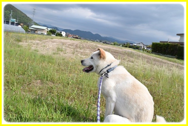 f:id:yasukazu01:20160515193420j:image