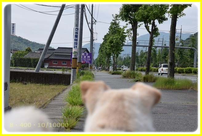 f:id:yasukazu01:20160515193606j:image
