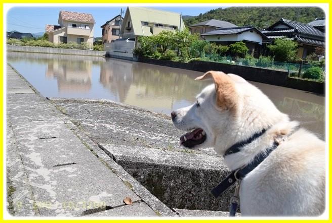 f:id:yasukazu01:20160518203231j:image