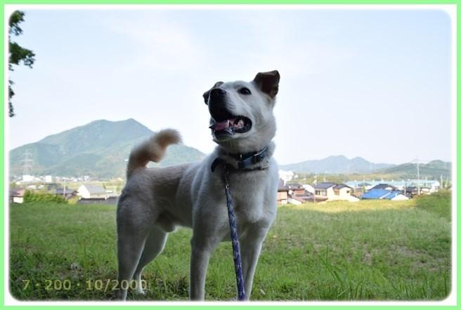 f:id:yasukazu01:20160522202331j:image