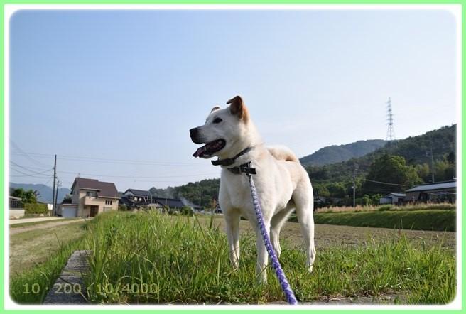 f:id:yasukazu01:20160522202418j:image