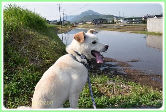 f:id:yasukazu01:20160522202839j:image
