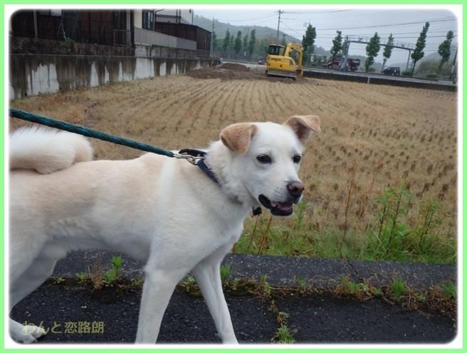 f:id:yasukazu01:20160525202245j:image