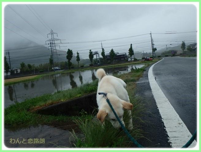 f:id:yasukazu01:20160525202752j:image