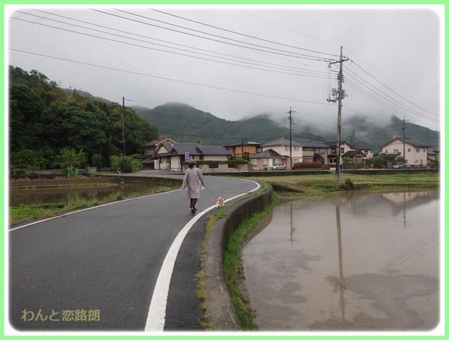 f:id:yasukazu01:20160525203527j:image