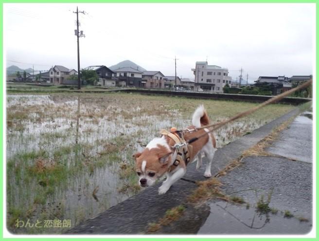 f:id:yasukazu01:20160525203535j:image